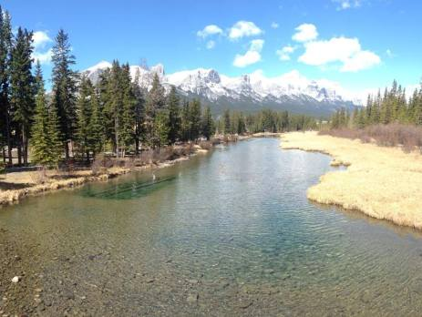 Canmore river view from bridge with trees and mountains on sunny day