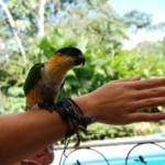 A bird sits on a volunteer's arm at the wildlife sanctuary in Ecuador