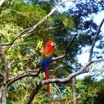 Ecuador wildlife volunteering colourful parrot