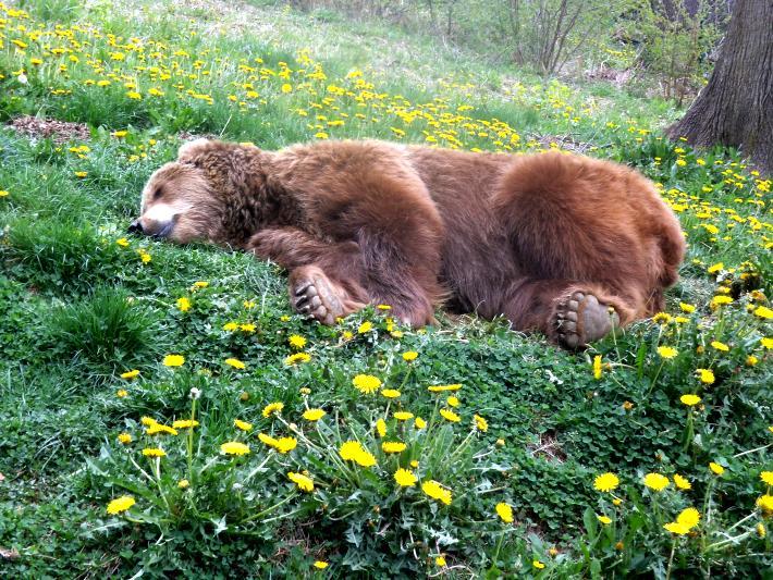 Betsy sleeps at the sanctuary