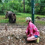 A volunteer watches the bears at the bear sanctuary in Romania