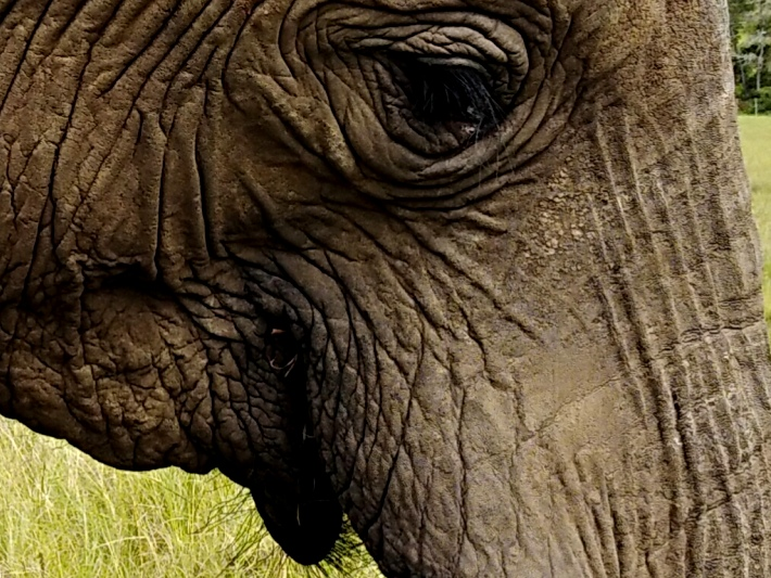 A close up of a rescued elephant