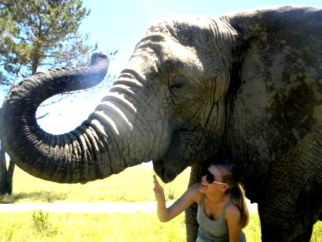 A volunteer experiences the size and grace of the elephants