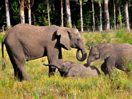 Three elephants socialise in the elephant park