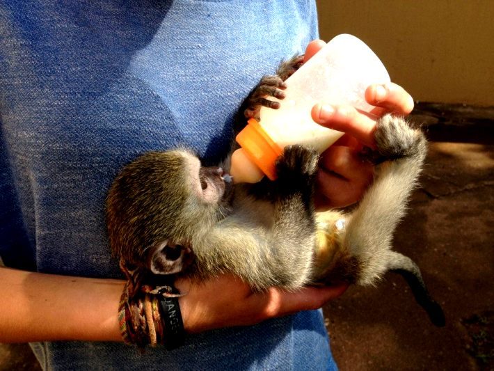 A baby is looked after at the primate rehabilitation centre in South Africa