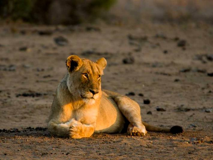 See beautiful animals on your Kruger Safari