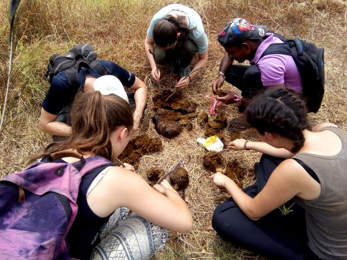 Volunteers help with analysing elephant dung to understand their grazing patterns in Sri Lanka
