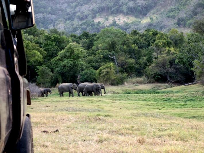 Volunteering diary: volunteers monitor elephants in the wild in Sri Lanka