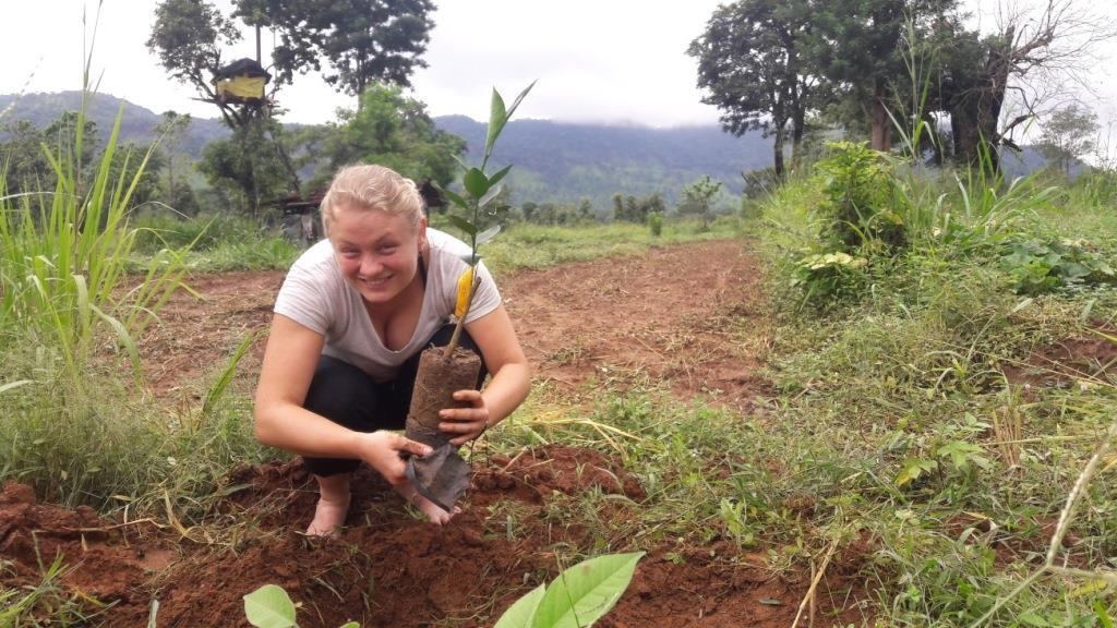 A volunteer on our Sri Lanka volunteer programme helps to plant orange trees. Elephants dislike oranges intensely, so planting oranges for farmers means that their crops will not be raided by these hungry giants