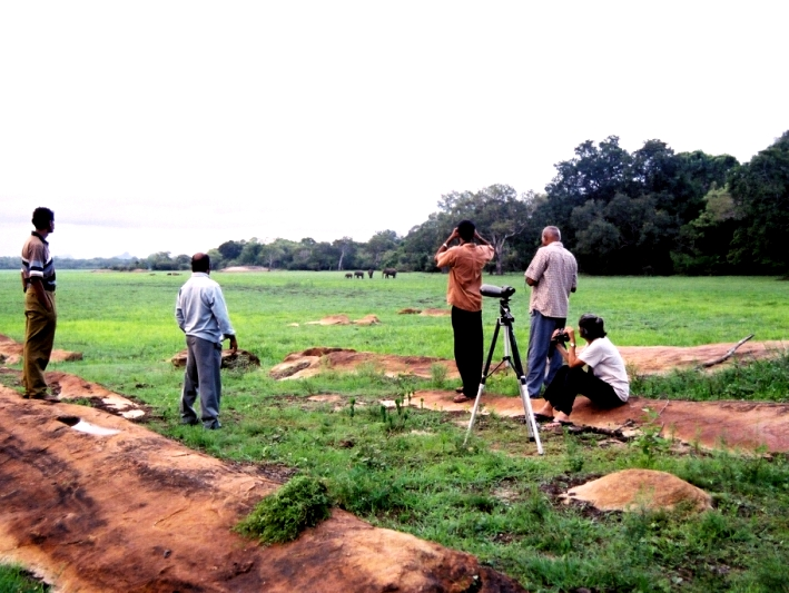 Volunteers monitor wild elephants in Sri Lanka