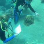 VOlunteers help to measure coral growth in Thailand
