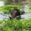 £100 off Thailand elephant conservation programmes