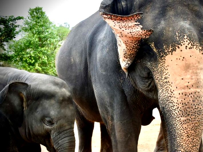 Mama and Baby elephant enjoy their new life in the elephant sanctuary