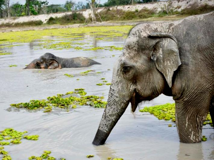 Rescued elephants in Thailand enjoy splashing in the lake