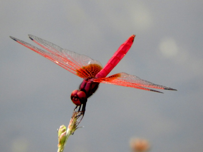 There is some incredible wildlife to be seen in Sri Lanka