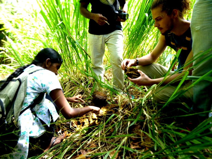 Volunteers analyse dung samples from wild elephants to identify what crops they are eating and which they aren't. Farmers are then recommended to plant the crops that the elephants choose not to eat.