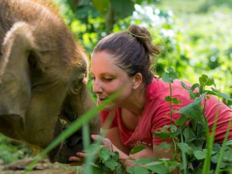 Meet elephants on your family holiday with a difference