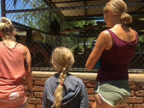 family volunteering-observing-young-monkeys-at-rehabilitation-project-in-south-africa