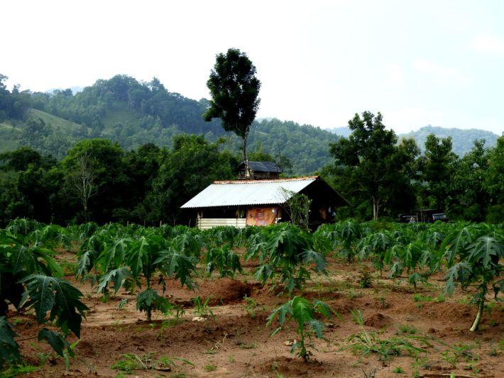 A farmer's field in Sri Lanka