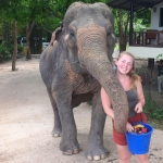 Volunteer feeding an elephant in Thailand