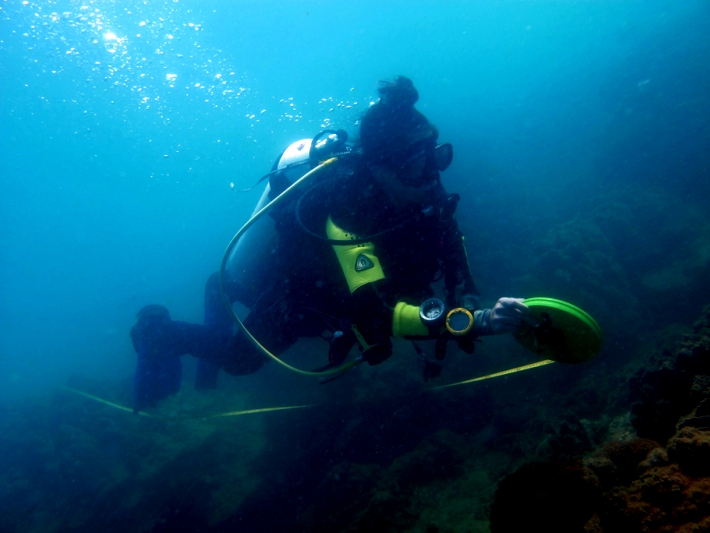 A diver helps to take measurements of the coral