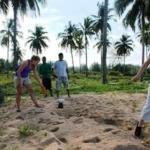 Measuring turtle tracks Thailand
