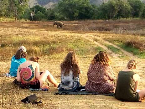 Volunteers closely monitor the wild elephants in Sri Lanka
