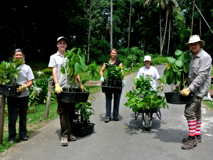 Volunteers help to regenerate the rainforest in Malaysia