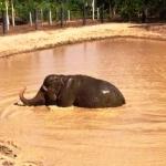 Thailand wildlife volunteering