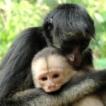 Work closely with a variety of monkeys in Ecuador