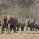 See elephants in the wild in Namibia