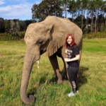 A volunteer enjoys meeting and working with the elephants in South Africa