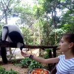 Volunteer feeds animals in the zoo in Malaysia