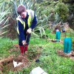 Volunteer helps with planting on the conservation project in Australia