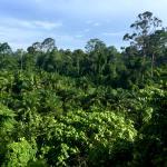 Lush green rainforest in Borneo