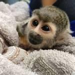 Baby monkey at the wildlife sanctuary