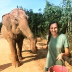 volunteering with elephants in Thailand