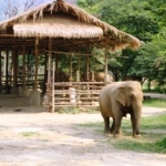 volunteering at an elephant sanctuary in Thailand