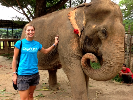 Spending time volunteering with animals abroad can be a lifechanging experience. Elephants are often exploited in countries like Thailand, and our volunteers help with rescued elephants, who are now living in safety and security in sanctuaries.
