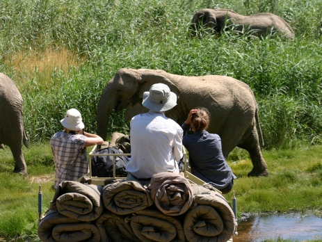 Volunteers monitor wild elephants in their natural habitat, and work to help to keep them in the wild