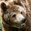 £100 off Romania bear programme