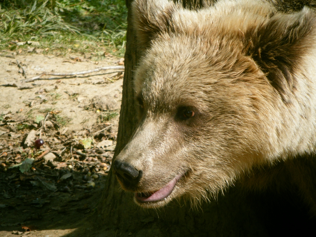 My time in Romania volunteering with bears: Shelby Cary