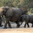 Elephant conservation volunteering for families in Namibia