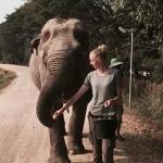 Animal volunteering