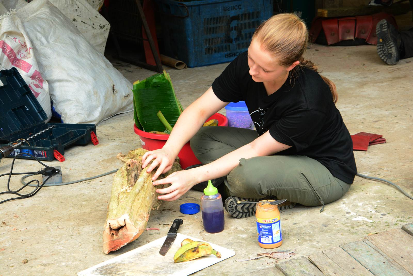 Creating enrichments for sun bears in Borneo