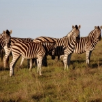 Game reserve volunteer experience