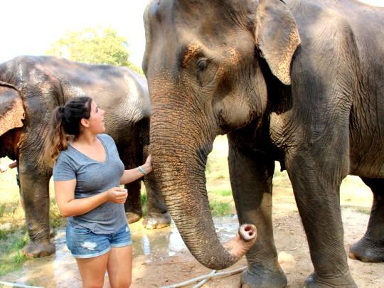 象の聖域ボランティアの休暇