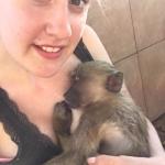 Monkey rehabilitation volunteering