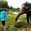 Family volunteering in Thailand at an elephant sanctuary