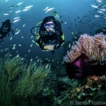 Marine conservation and diving